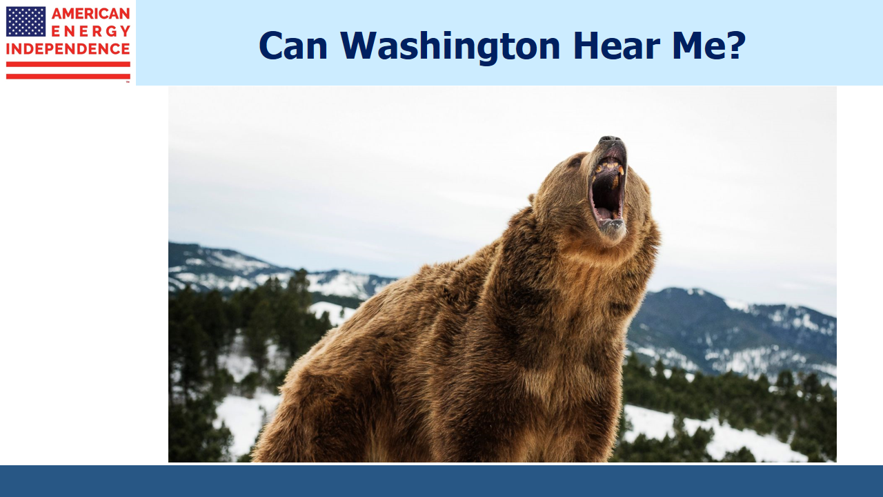The Bears are Roaring
